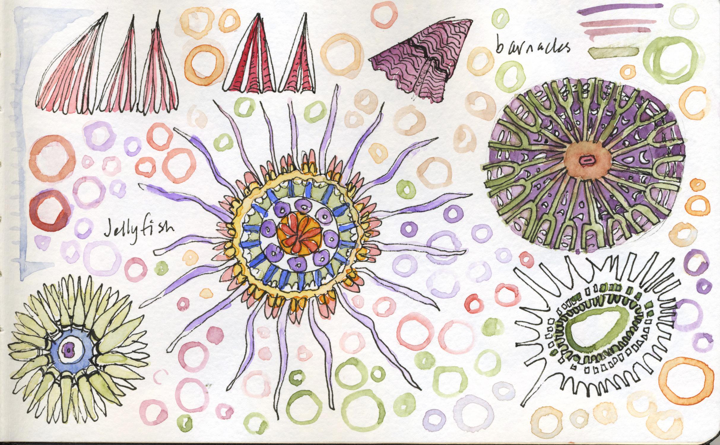 jellyfishbarnacles